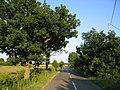 Country road, Lower Gravenhurst, Beds - geograph.org.uk - 193408.jpg