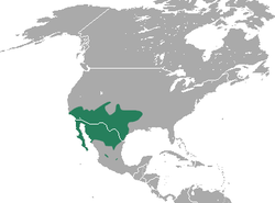 Crawford's Gray Shrew area.png