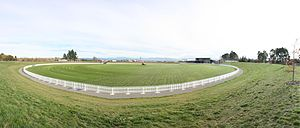 Saxton Oval - Image: Cricket oval panorama