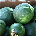 Cucurbita pepo round Zucchini.jpg