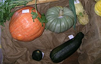 Cucurbitaceae - Pumpkins and squashes displayed in a show competition