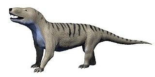 Galesauridae Extinct family of cynodonts