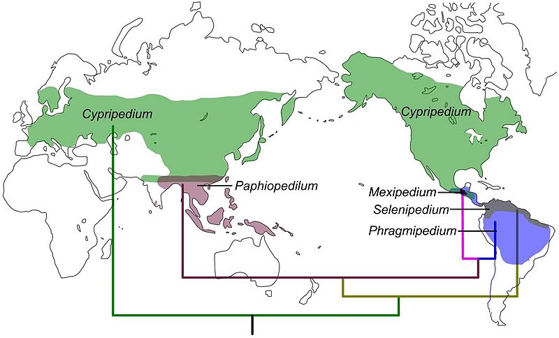 File:Cypripedioideae - Distribution map - journal.pone.0038788.jpg
