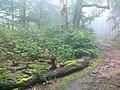 Czerwony szlak na Kalenicę - panoramio.jpg