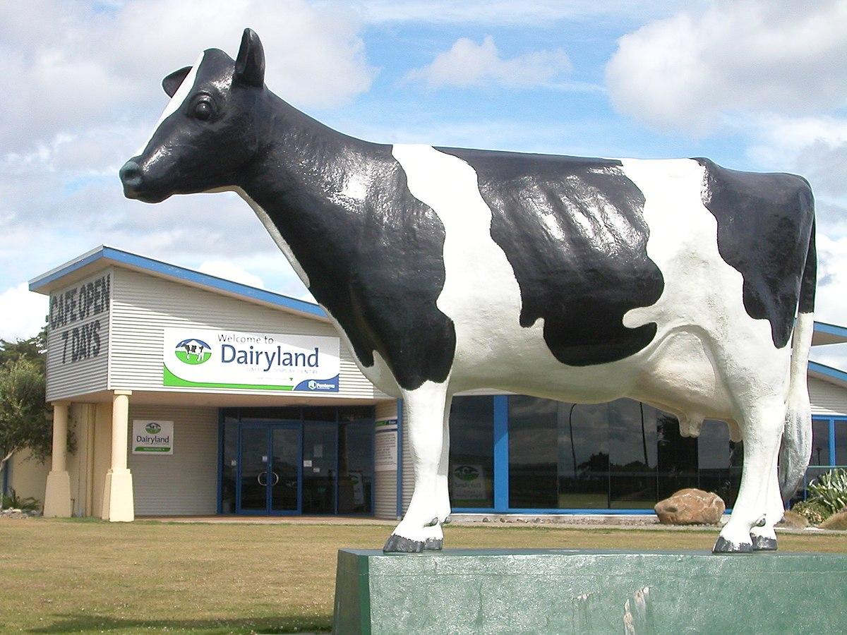 Dairy Farming In New Zealand Wikipedia