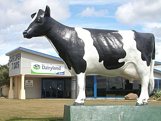 Dairy farming in New Zealand