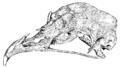Darwin Domestic 136.png