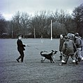 Day 130 - West Midlands Police - Dog Handlers training (1980) (13958307939).jpg