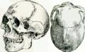 De generis humani varietate nativa, Fig 1 (IA b2851886x).png