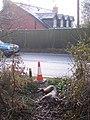 Dead deer beside the A21 Hastings Road - geograph.org.uk - 1656778.jpg