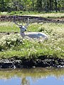 Deer Meadow Farms Corn Maze, Deacon Rd, Birds Hill (502013) (24965800196).jpg