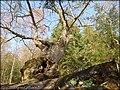 Den Hule Eg ved Almind sø - panoramio.jpg