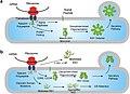 Diagram-depicting-the-effect-of-various-disease-causing-missense-mutations-on.jpg