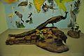 Diorama - Indian National Bird - Zoological Gallery - Indian Museum - Kolkata 2014-04-04 4384.JPG