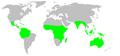 Distribution.barychelidae.1.png