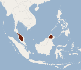 Distribution of Murina aenea.png