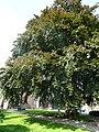 Dodewaard Groene Woud Kerkstraat 1 2.jpg