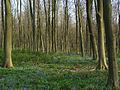 Doles Wood - geograph.org.uk - 404253.jpg