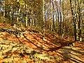 Doline in Steilstufe des Muschelkalks zwischen Bad Berka und Saalborn 03.jpg