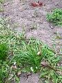 Domestic spring flowers (Mar 2020) 5.jpg