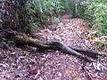 Doncella de palo, sentada en el bosque.jpg