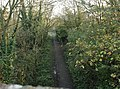 Downs link cycle path - geograph.org.uk - 83096.jpg