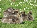 Dozing in the sunshine - geograph.org.uk - 812350.jpg