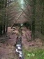 Drainage Ditch in Leanachan Forest - geograph.org.uk - 511374.jpg