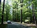 Droga do Żar wiosną - panoramio.jpg