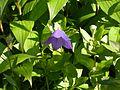 Dscn1464 japan nature.jpg
