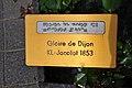 Duftrosengarten Rapperswil - Gloire de Dijon KL Jacotot 1853 2010-08-29 16-13-00.JPG