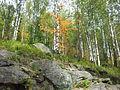 Dvuglavaya sopka vegetation2.jpg