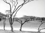 ETH-BIB-Wasserstelle in der Serengeti-Kilimanjaroflug 1929-30-LBS MH02-07-0361.tif