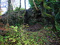 Eaglesham or Orry Cotton Mill ruins.JPG