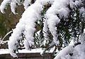 Early snow in Torino (5217549570).jpg