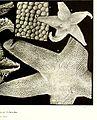 Echinodermes (astéries, ophiures et échinides) (1912) (20517694103).jpg