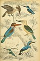 Edinburgh journal of natural history and of the physical sciences (1839) (20544998843).jpg