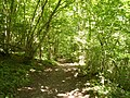Eggerslack Wood - geograph.org.uk - 1351552.jpg