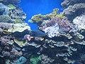 Eilat Coral World Underwater Observatory 22.jpg
