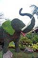 Elephant @ Taipei International Flora Expo (5235119822).jpg