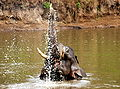 Elephant in Nagarhole National Park.jpg