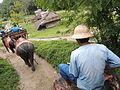 Elephant riding on Phuket (november, 2013) by shakko.JPG