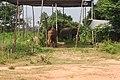 Elephants at elephant village (Bantaklang) - panoramio.jpg
