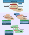 Engineering modifications to improve specificity of CRISPR-cas9.png