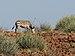 Equus zebra hartmannae.jpg