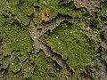 Erdboden grün gerissen W.jpg
