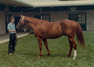 Exclusive Native - Exclusive Native at Spendthrift Farm in 1981