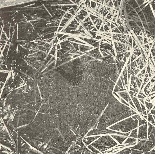 File:FMIB 41591 Nests of the Dogfish (Almia calva).jpeg