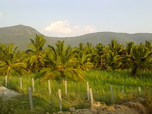 Dharmapuri district - Farm lands, near Pappireddipatti