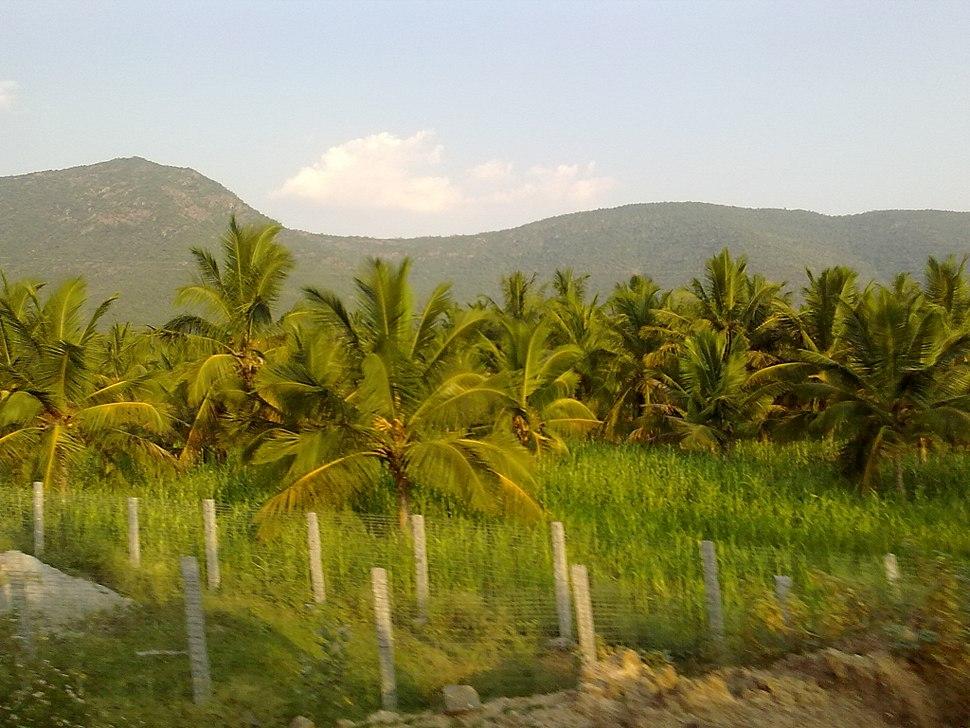 Farm Land, Pappireddipatti